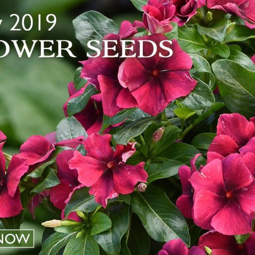 Park Seed: Vegetable Seeds, Flower Seeds, Plants, Bulbs, Trees and Gardening Supplies  img2