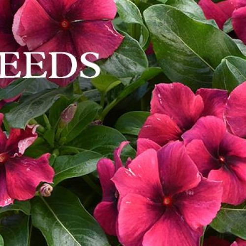 Park Seed: Vegetable Seeds, Flower Seeds, Plants, Bulbs, Trees and Gardening Supplies  img3