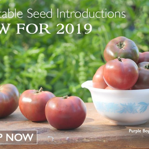 Park Seed: Vegetable Seeds, Flower Seeds, Plants, Bulbs, Trees and Gardening Supplies  img0